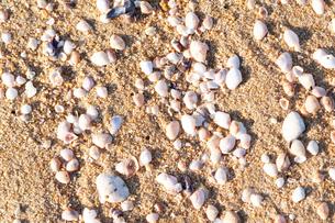 砂浜に打ち寄せられた貝殻の写真素材 [FYI04145255]