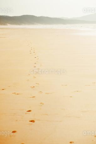 砂浜に続く足跡の写真素材 [FYI04145273]