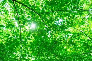 新緑の林と木漏れ日の写真素材 [FYI04145291]
