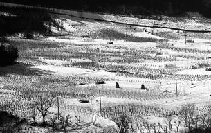 奥多摩,厳冬の丹波山村,山の斜面に広がる畑の写真素材 [FYI04145902]