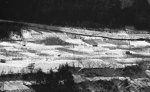 奥多摩,厳冬の丹波山村,山の斜面に広がる畑の写真素材 [FYI04145906]