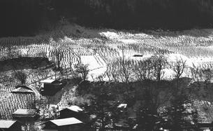 奥多摩,厳冬の丹波山村,山の斜面に広がる畑の写真素材 [FYI04145907]