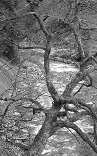 丹波川の写真素材 [FYI04146018]