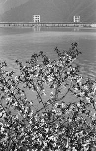 奥多摩湖の写真素材 [FYI04146031]