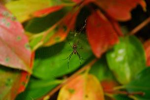 蜘蛛の写真素材 [FYI04147590]