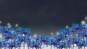 青い彼岸花 黒背景のイラスト素材 [FYI04149714]