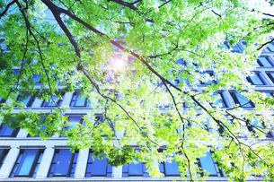 新緑と高層ビルの窓の写真素材 [FYI04150509]