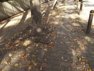 街頭の落葉の写真素材 [FYI04150901]