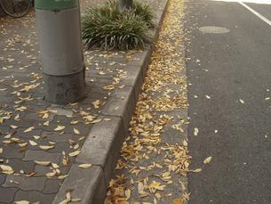 街頭の落葉の写真素材 [FYI04150902]