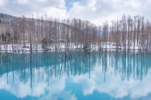 雪解けの青い池の写真素材 [FYI04153045]