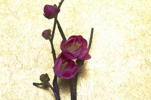 梅の花の写真素材 [FYI04153132]
