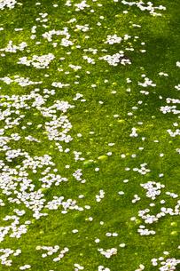 弘前公園のお堀に散った桜の花びらの写真素材 [FYI04153245]