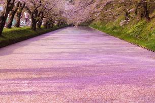 弘前公園  花筏(はないかだ)の写真素材 [FYI04153324]