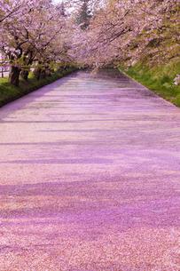 弘前公園  花筏(はないかだ)の写真素材 [FYI04153333]