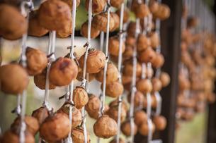 日本の風景、吊るし柿の写真素材 [FYI04153626]