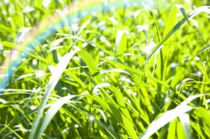 陽があたる草むらの写真素材 [FYI04153923]