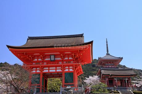 4月 桜の清水寺  仁王門と三重塔の写真素材 [FYI04153967]