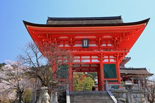 4月 桜の清水寺  仁王門の写真素材 [FYI04153969]
