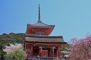 4月 桜の清水寺  三重塔の写真素材 [FYI04153970]