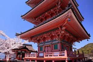4月 桜の清水寺  三重塔の写真素材 [FYI04153973]