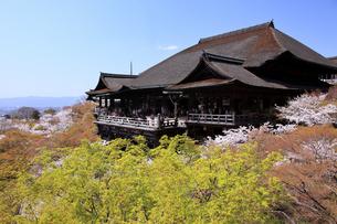 4月 桜の清水寺  清水の舞台の写真素材 [FYI04153979]
