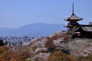 4月 桜の清水寺  三重塔の写真素材 [FYI04153984]