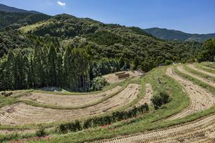 日本の風景、稲刈り後の棚田の写真素材 [FYI04154601]