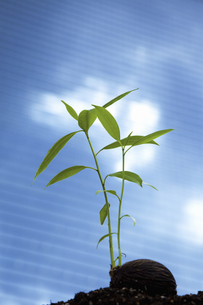 ビルに照らされる種子の写真素材 [FYI04158585]