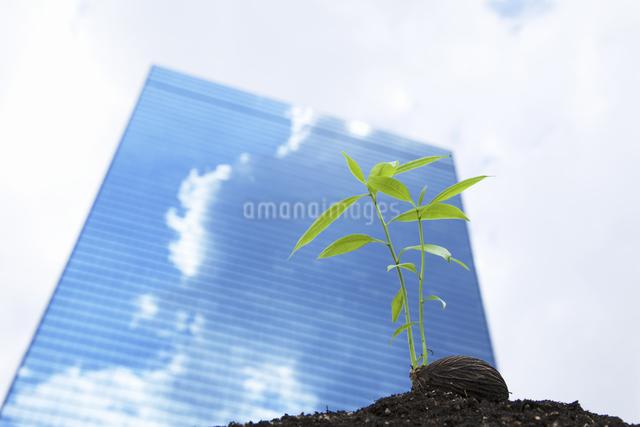 ビルに照らされる種子の写真素材 [FYI04158586]