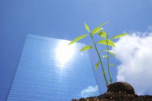 ビルに照らされる種子の写真素材 [FYI04158588]