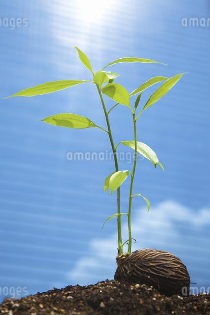 ビルに照らされる種子の写真素材 [FYI04158589]