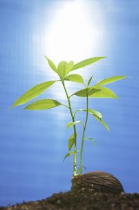 ビルに照らされる種子の写真素材 [FYI04158590]