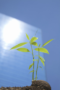 ビルに照らされる種子の写真素材 [FYI04158591]