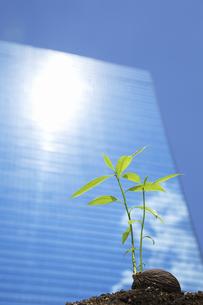 ビルの光に照らされる種子の写真素材 [FYI04158592]