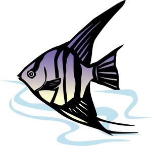 熱帯魚のイラスト素材 [FYI04159482]