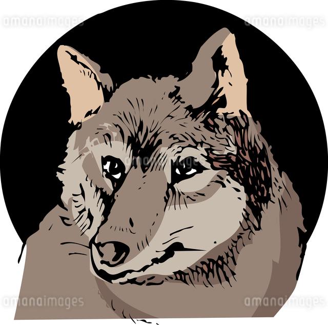 オオカミのイラスト素材 [FYI04159783]