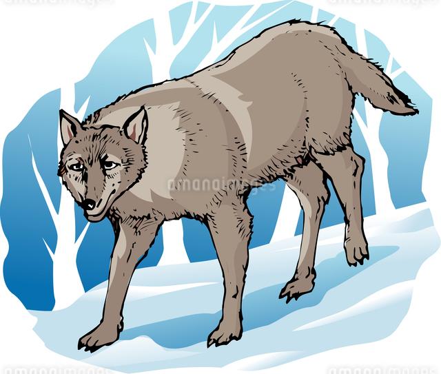 オオカミのイラスト素材 [FYI04159784]