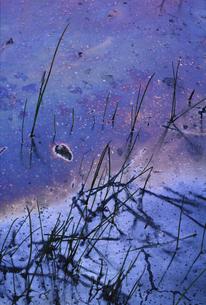 油分のしみ出た沼の写真素材 [FYI04161511]