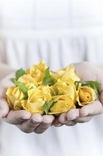 両手いっぱいの黄色いバラの写真素材 [FYI04162346]