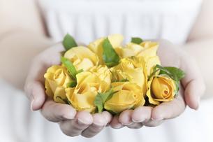 両手いっぱいの黄色いバラの写真素材 [FYI04162349]