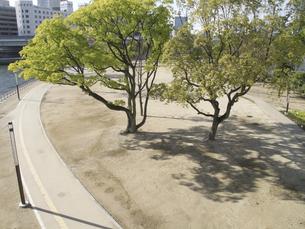 中之島公園の写真素材 [FYI04163595]