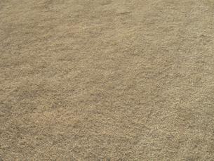 冬枯れの芝の写真素材 [FYI04163809]