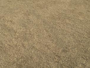 冬枯れの芝の写真素材 [FYI04163810]