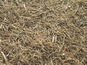 冬枯れの芝の写真素材 [FYI04163811]