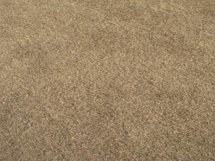 冬枯れの芝の写真素材 [FYI04163814]