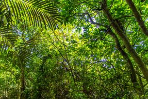 太陽に照らされる森の木の葉の写真素材 [FYI04164531]