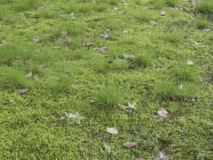 雑草と水苔の写真素材 [FYI04165753]
