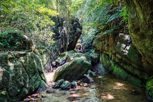 西表島のジャングルの写真素材 [FYI04166736]