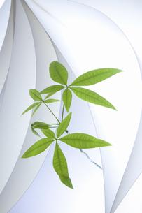 紙のテクスチャと新芽の写真素材 [FYI04171608]