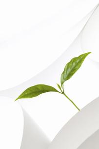 紙のテクスチャと新芽の写真素材 [FYI04171682]